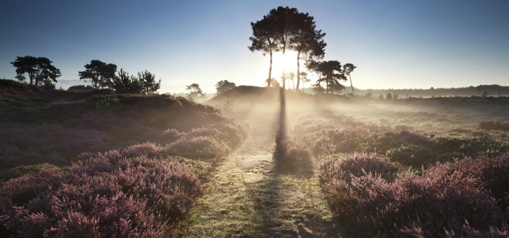 Wellness op de Veluwe - WestCord Hotels