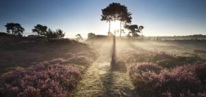 Arrangement Wellness op de Veluwe - Westcord Hotels