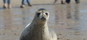 Zeehonden spotten op Terschelling - Westcord Hotels