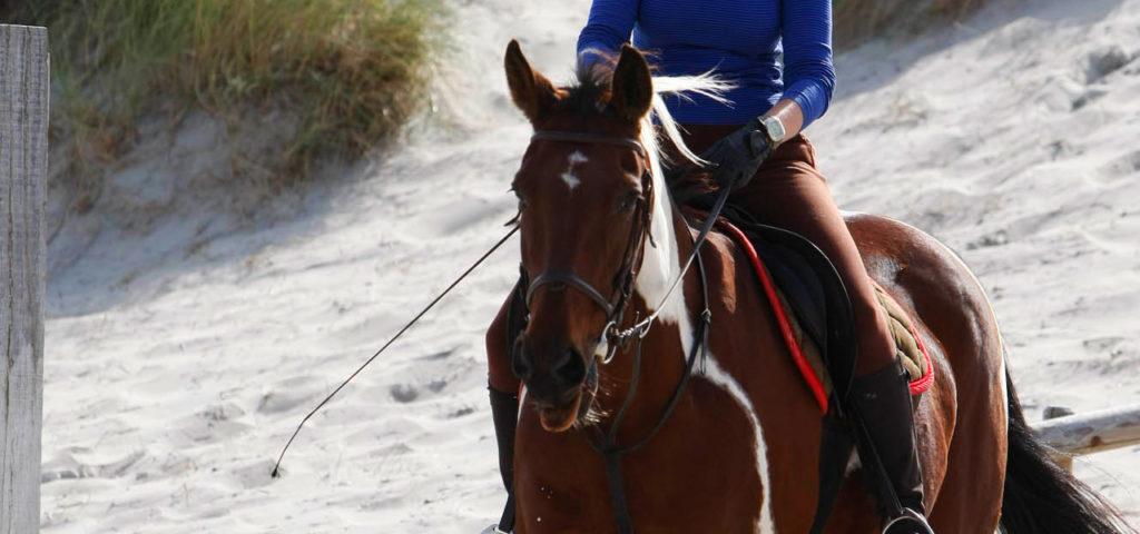 paardrijden-op-vlieland-westcord-strandhotel-seeduyn-manege-de-seeruyter-3 - Westcord Hotels