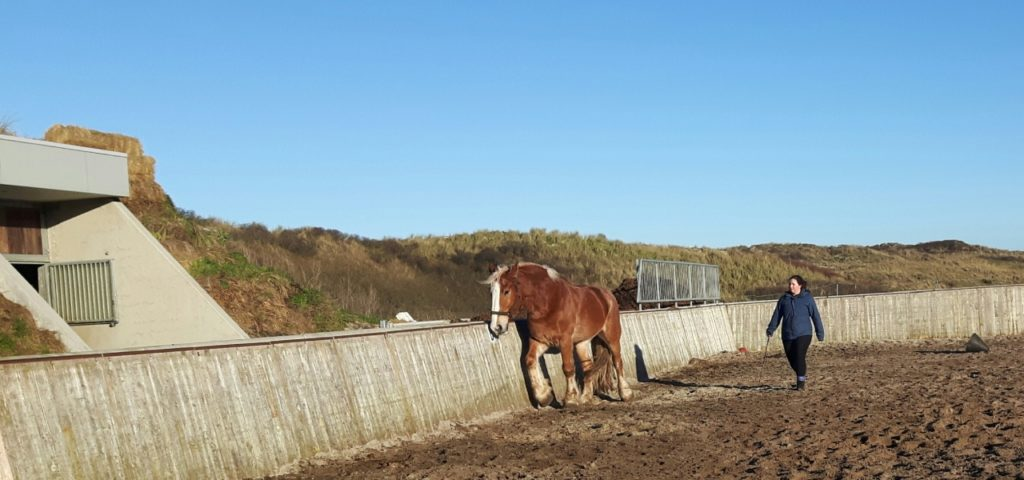 Vlieland paardencoaching duin - Westcord Hotels