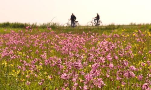 Vier het voorjaar op de Wadden