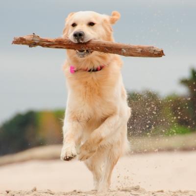 hond-hotels-ameland