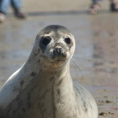 zeehonden-spotten-hotels-terschelling