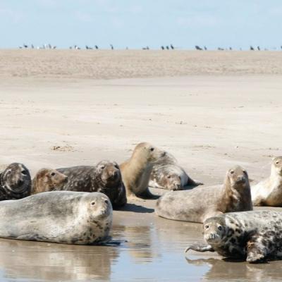 zeehonden-spotten-hotels-vlieland